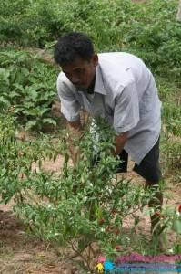 Farmer Daeng